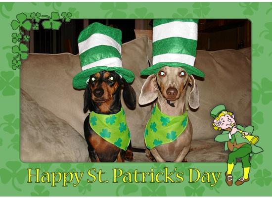 St Patrick's Day 5